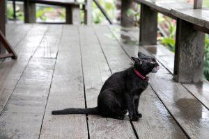 あひるなんちゃら関村個人企画 in 福岡『猫は地球を見て美しいと思わないよ』と『ラグランジュブランチ』